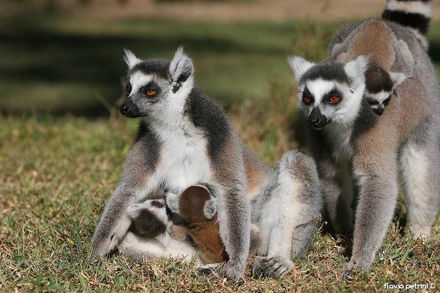 Madagascar_41 AFRICA