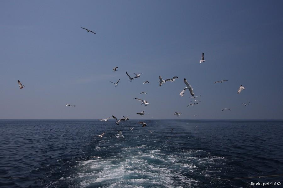 Una_giornata_di_pesca_29-1 UNA GIORNATA DI PESCA REPORTAGE