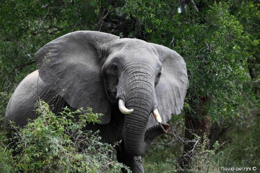 Kruger_01 AFRICA