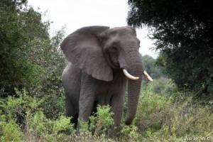 Kruger_29-300x200 AFRICA
