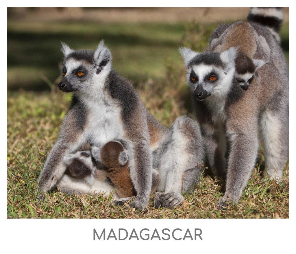 MADAGASCAR-1024x878 AFRICA